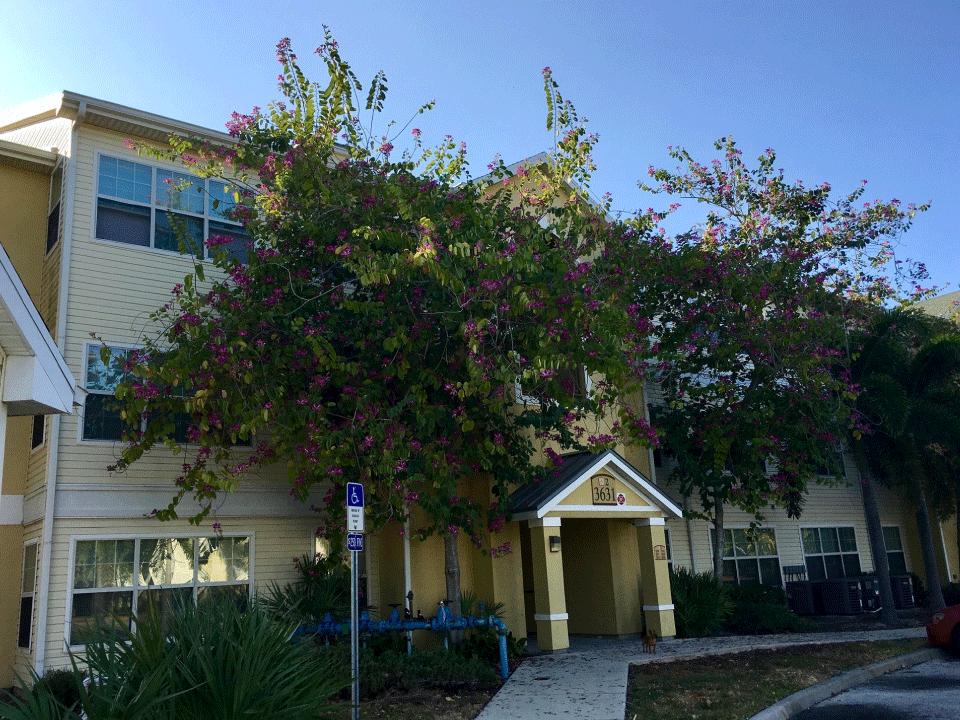 Maple Crest Building